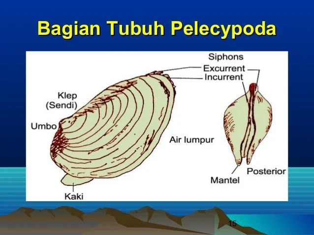 Paleontologi adalah ilmu yang mempelajari tentang sejarah kehidupan di bumi termasuk hewan dan tumbuhan zaman lampau yang telah menjadi. Evolusi Eukaryotik