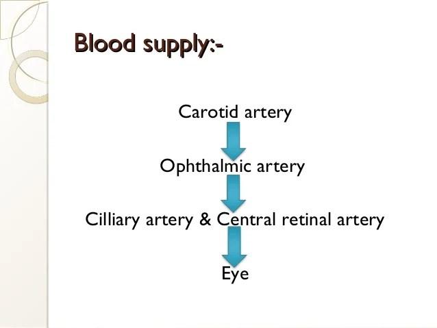 ppt on Eye anatomy