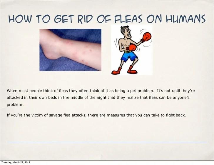 Fleas Hair Human Out