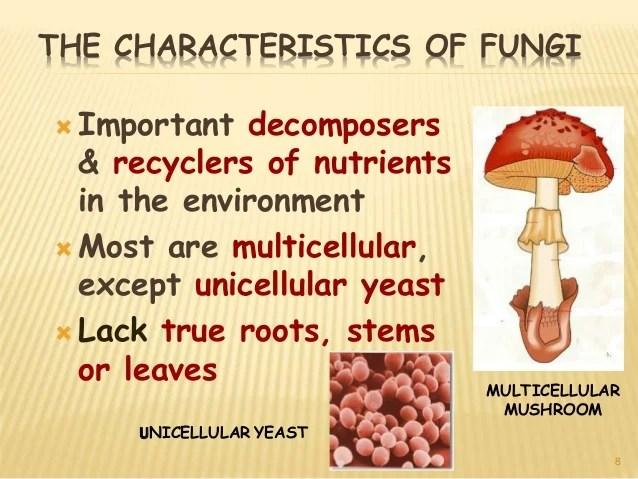 Mushroom Characteristics