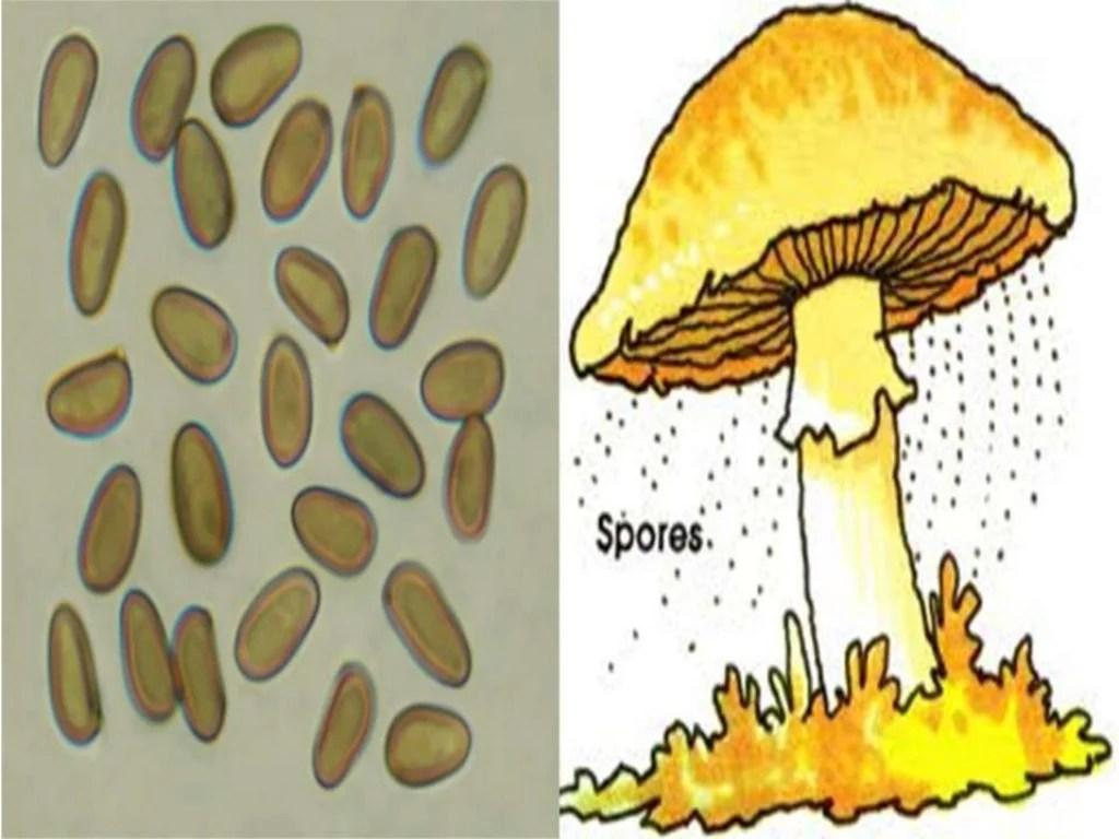 Fungi Protists And Bacteria