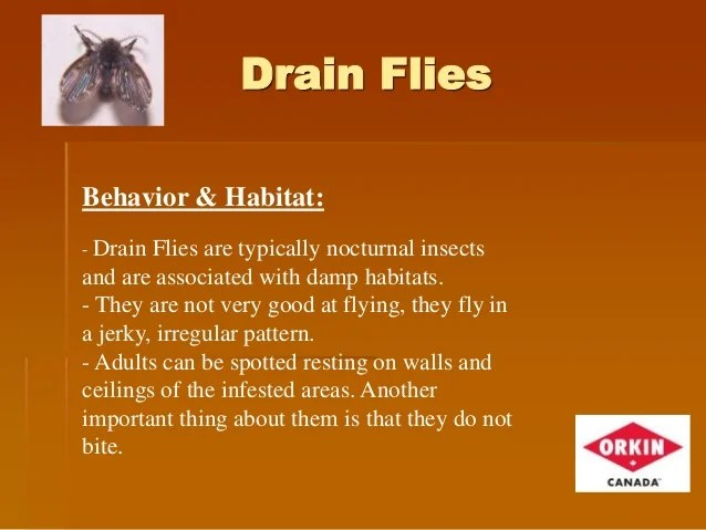 Image Result For How To Get Rid Of Drain Flies In The Bathroom