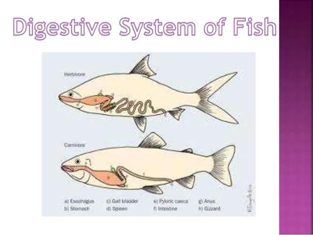 Comparative Anatomy - Digestive System