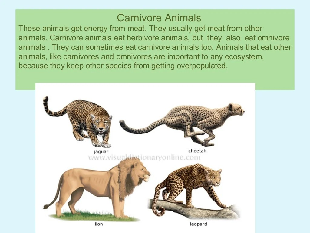 Herbivore Carnivore And Omnivore Animals