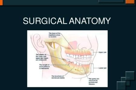 Dental Map Teeth Numbers Dental Implants 4k Pictures 4k Pictures