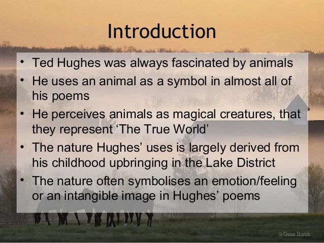 Ted hughes the horses essay