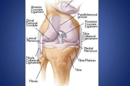 Interior ligaments and cartilage knee full hd maps locations knee joint unhappy triad tibial collateral ligament medial knee joint unhappy triad tibial collateral ligament medial meniscus anterior cruciate ligament ccuart Choice Image