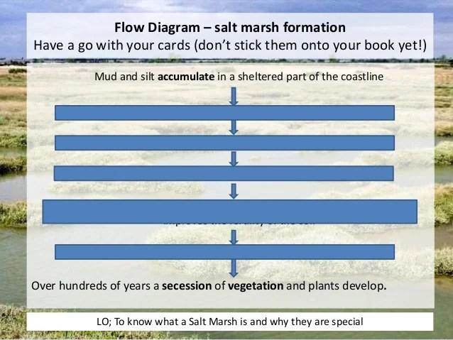 L11 salt marshes ap