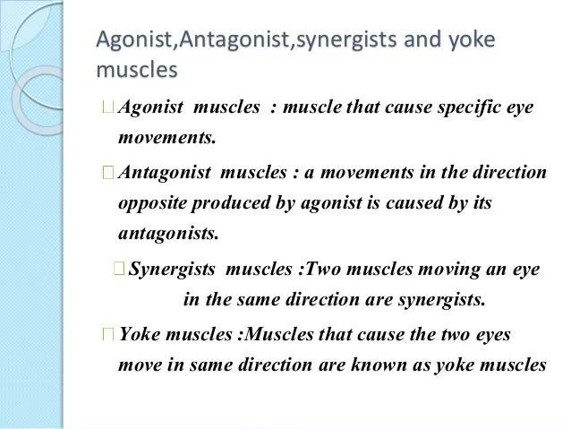 Agonist Anatomy Definition