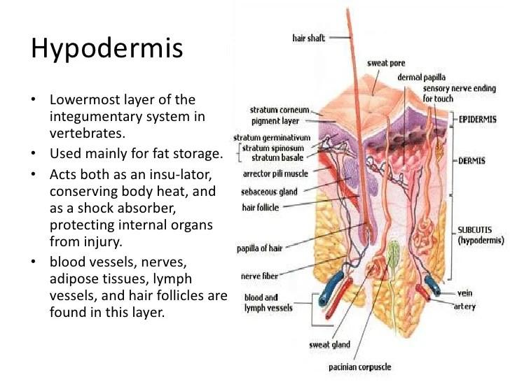 Keratin Hair Structure Diagram