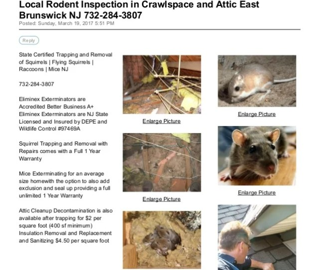 Local Rodent Inspection In Crawlspace And Attic East Brunswick Nj