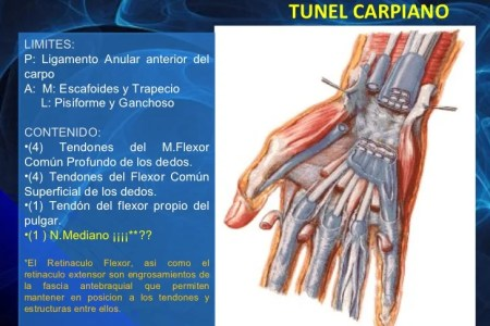 canal del carpo anatomia canal » Full HD MAPS Locations - Another ...