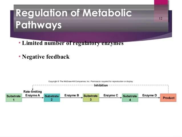 Metabolic processes