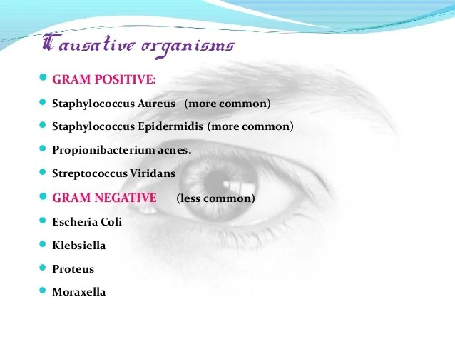 Pseudomonas Aeruginosa Gram Stain Negative