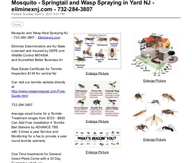 Mosquito Springtail And Wasp Spraying In Yard Nj Eliminexnj Com