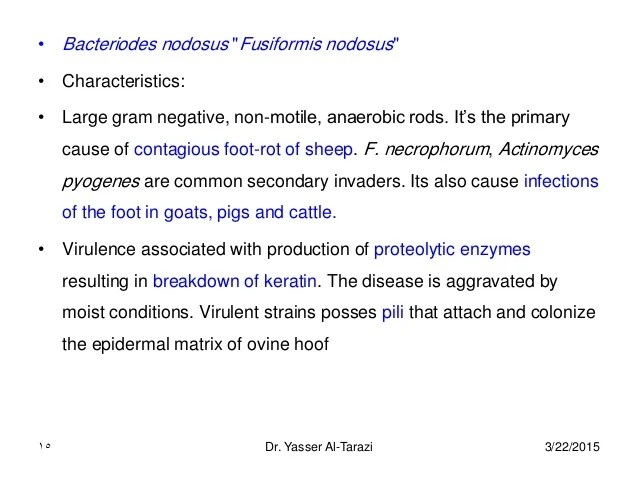 Anaerobic Infections Contagious