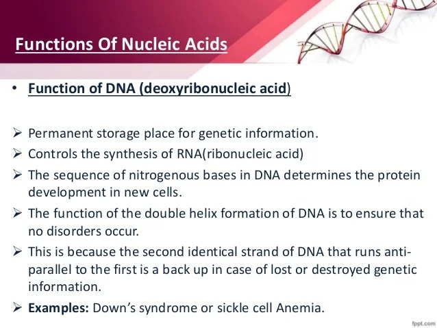 Functions Dna