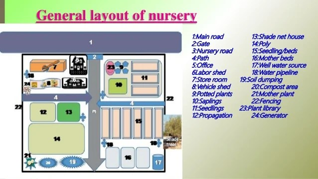 To plan for raising quality planting materials for raising. Nursery Layout