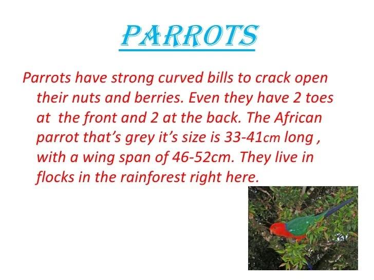 parrot adaptations