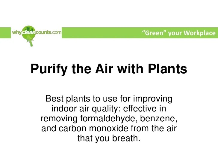 Best Plants for Improving Indoor Air Quality