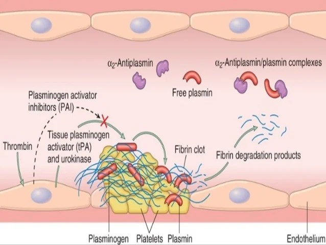 Platelet Cell Structure