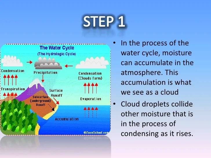 Ecosystem Worksheets 5th Grade
