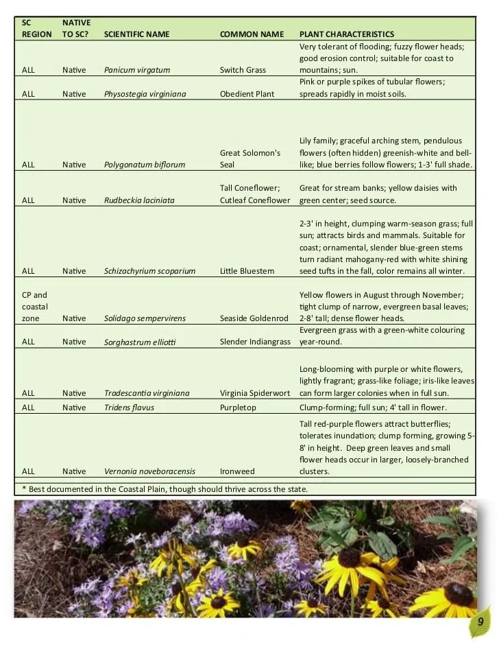 rain garden plants south carolina South Carolina Rain Garden Manual