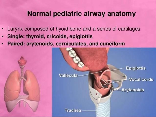 Pediatric Lower Airway Anatomy