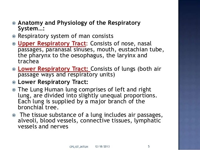 Targeted Drug Delivery System To Respiratory System