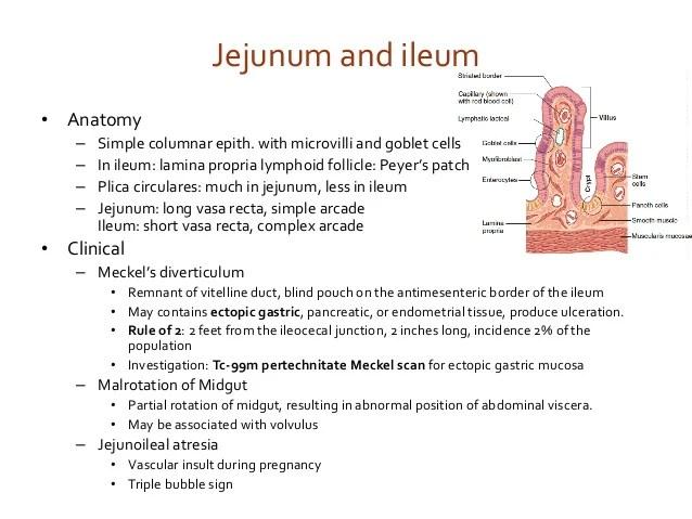 USMLE step 1 Review Anatomy of Gastrointestinal System 2018