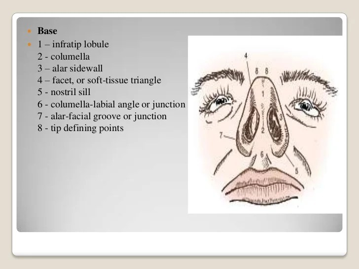 Posterior Nasal Part Of
