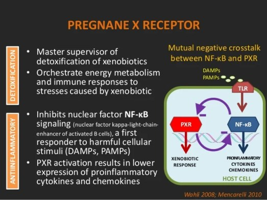 Image result for pregnane x detoxification
