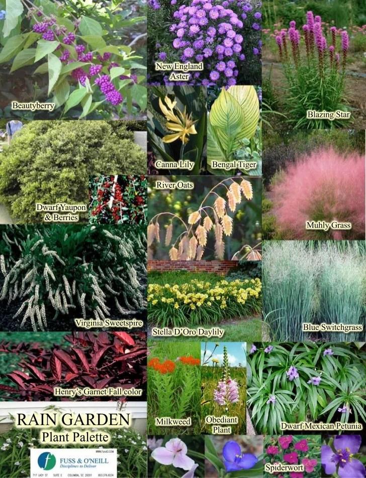 rain garden plants south carolina / 1