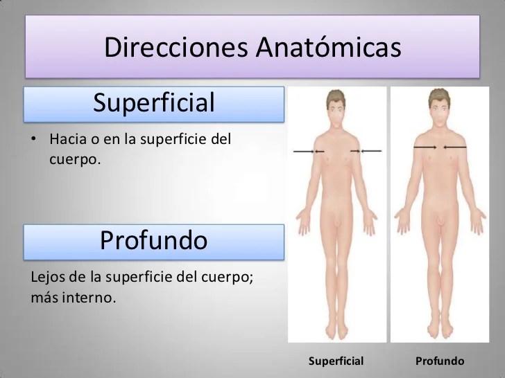 Terminos de relación y comparación | Anatomía de superficie