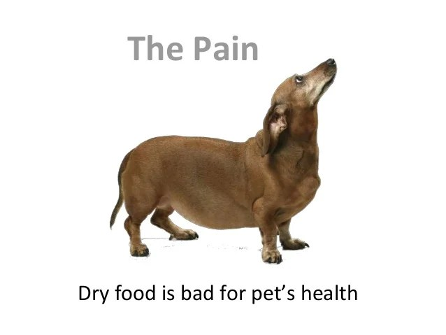 Image result for dry pet food is bad
