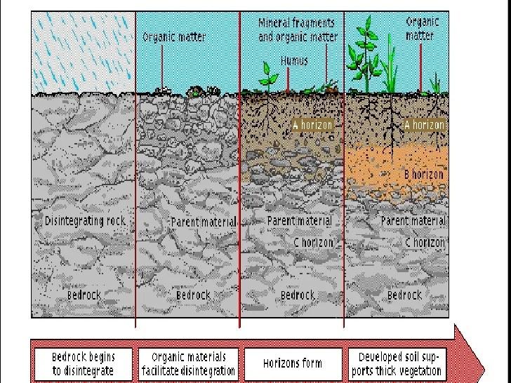 Soil Particle Size
