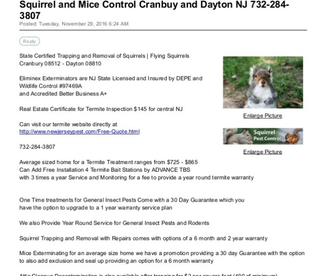 Squirrel And Mice Control Cranbuy And Dayton Nj