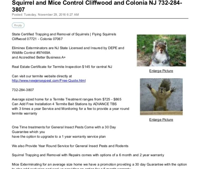 Squirrel And Mice Control Cliffwood And Colonia Nj