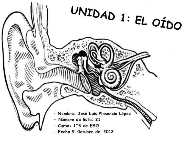 Middle Ear Labeled Inner Diagram