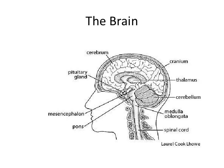 the brain 2 728?resize\\\=665%2C499\\\&ssl\\\=1 lovely fender humbucker wiring diagram contemporary wiring fender scn pickups strat wiring diagram at readyjetset.co