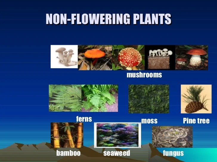 Examples Flowering And Nonflowering Plants