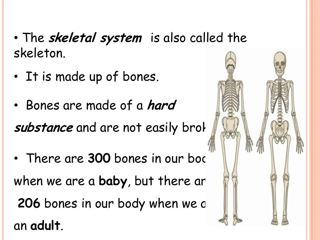 The Skeletal System Amp The Muscular System