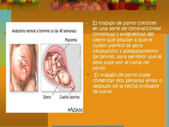 anatomia del canal de parto » Full HD MAPS Locations - Another World ...