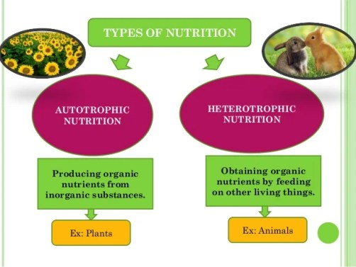 Image result for autotrophic and heterotrophic nutrition