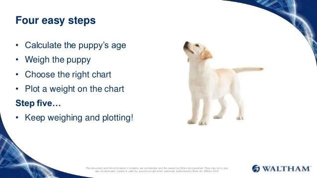 Labrador Puppy Growth Chart Erkalnathandedecker