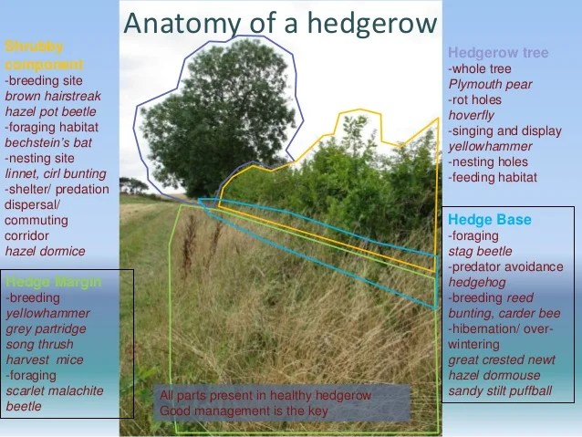 West Weald Landscape Project Conference: Hedgerows