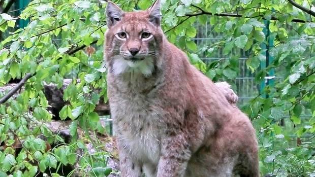 news germany - lynx