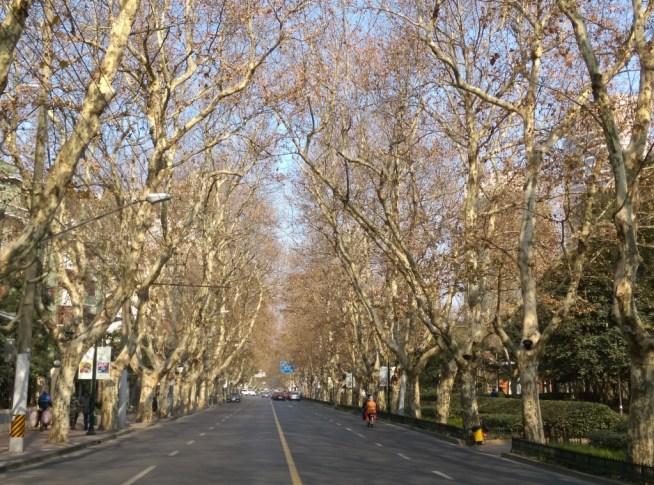 AAAA5 Shanghai-衡山路 最美的上海最美的梧桐景緻