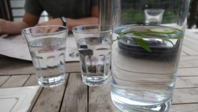 30 芎林-綠色小徑 賞桐花順便來喝個茶吧