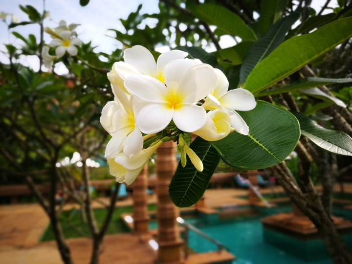 lemeridienangkor36 Siem Reap-Le Méridien Angkor吳哥艾美 CP值超高 環境舒適餐點好吃還有免費喝到爽的Coffee Bar